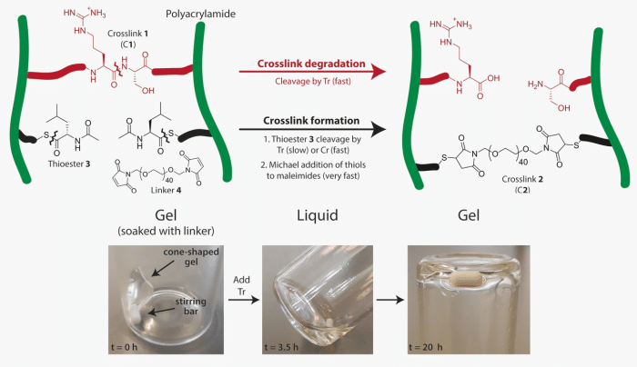 Preprogramming Complex Hydrogel Responses using Enzymatic Reaction Networks