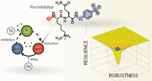 Molecular Engineering of Robustness and Resilience in Enzymatic Reaction Networks