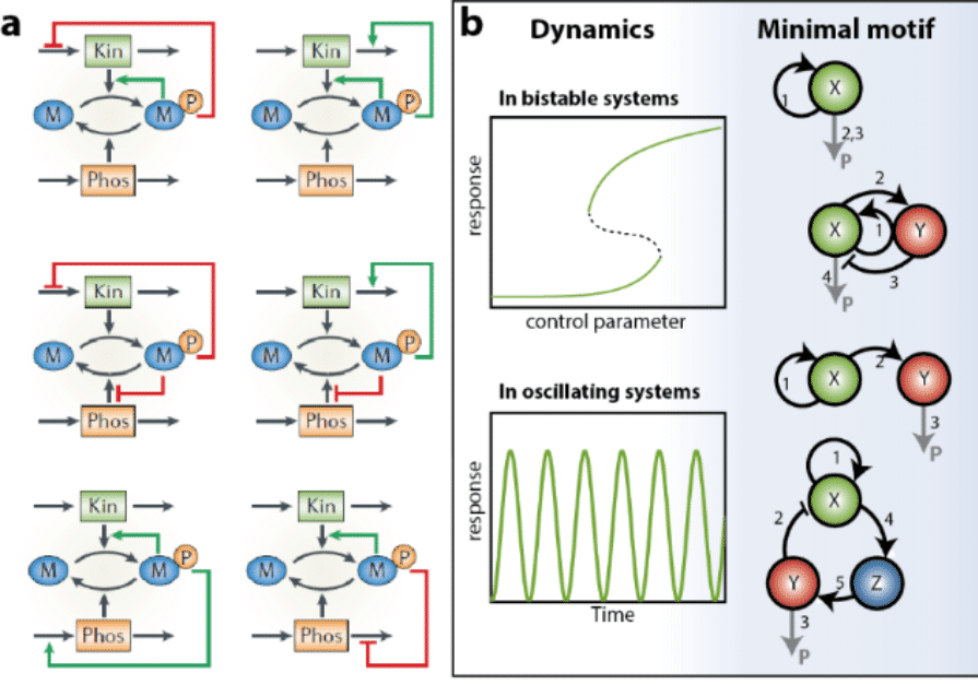 Grip on complexity in chemical reaction networks