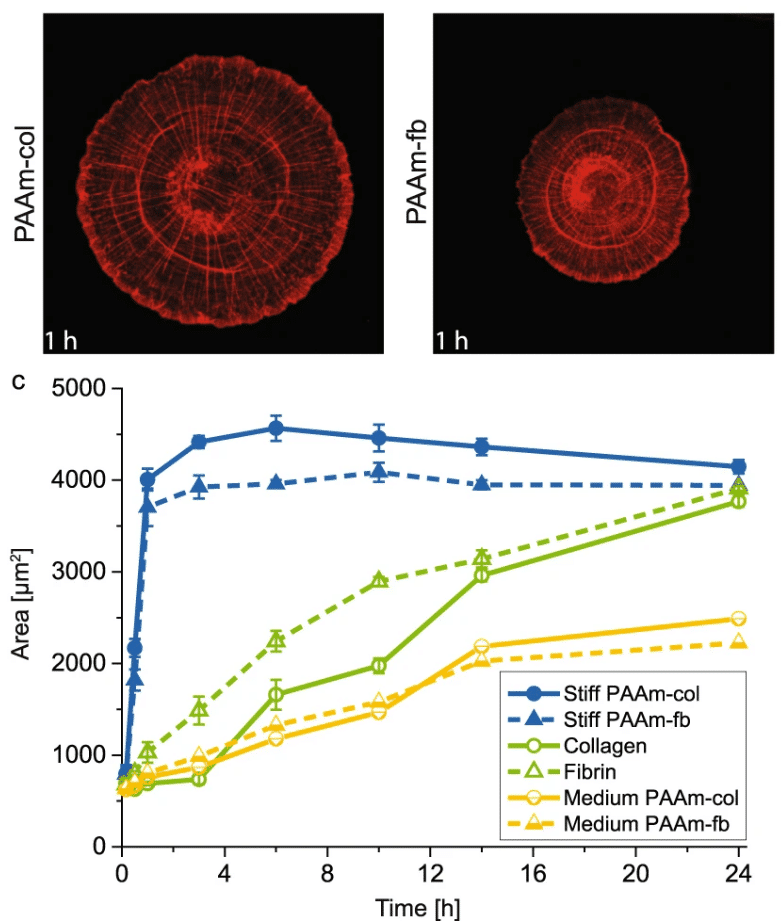 Adaptation trajectories during adhesion and spreading affect future cell states