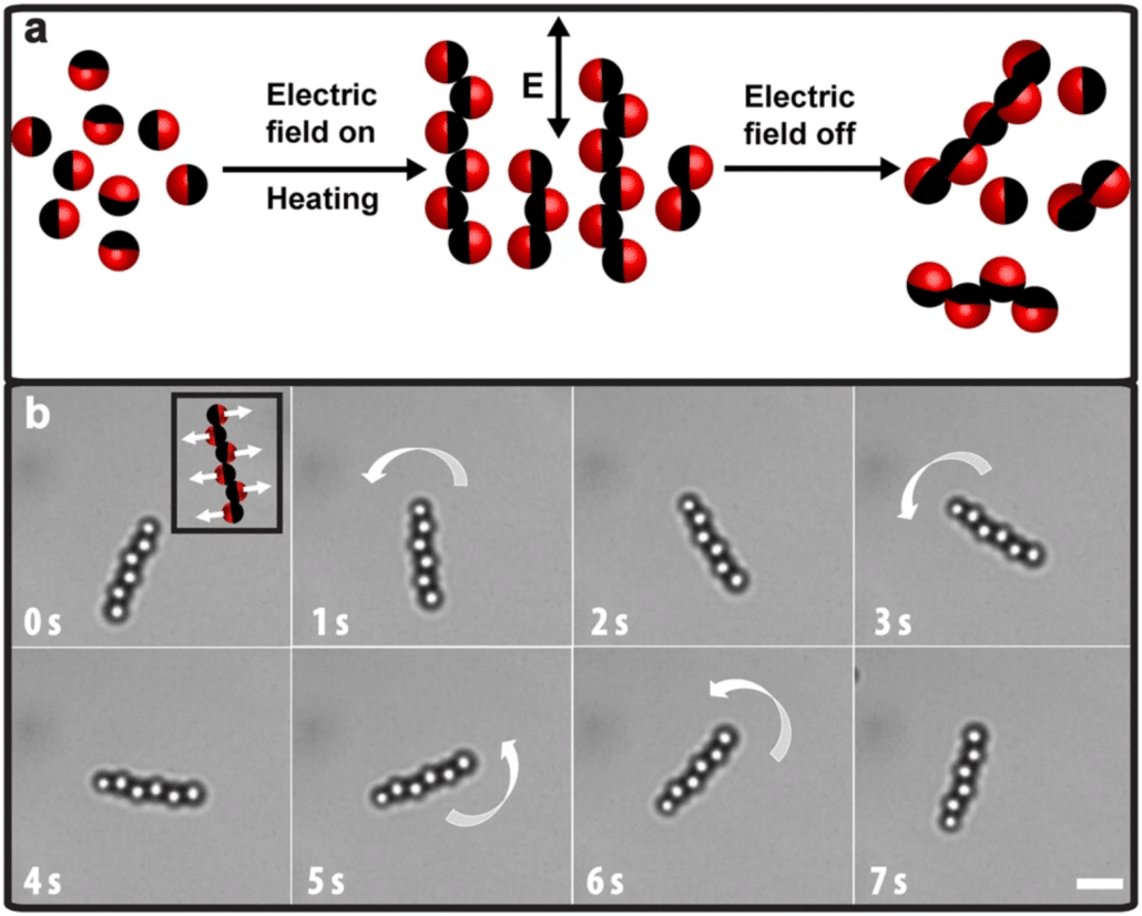 Rational design and dynamics of self-propelled colloidal bead chains: from rotators to flagella