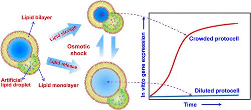 Macromolecularly Crowded Protocells from Reversibly Shrinking Monodisperse Liposomes