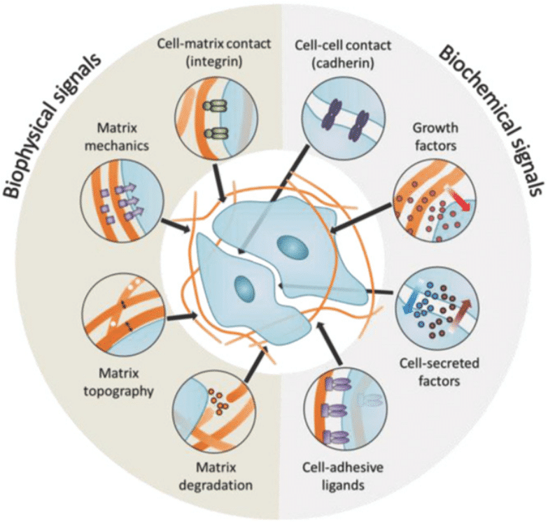 Recent Advances in Engineering the Stem Cell Microniche in 3D