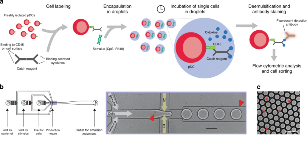 Single-cell analysis reveals that stochasticity and paracrine signaling control interferon-alpha production by plasmacytoid dendritic cells
