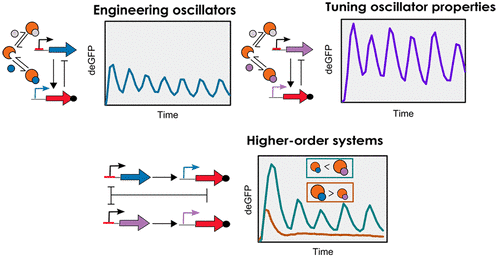 Sigma Factor-Mediated Tuning of Bacterial Cell-Free Synthetic Genetic Oscillators