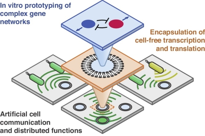 Cell-free microcompartmentalised transcription-translation for the prototyping of synthetic communication networks