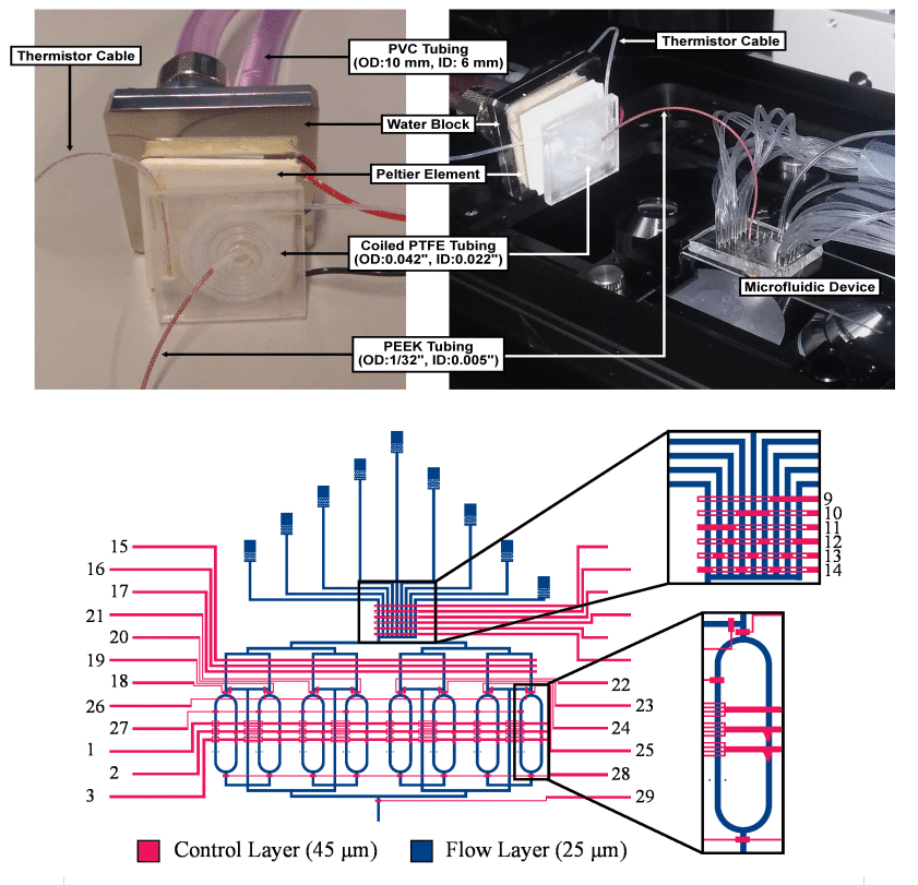 A Multilayer Microfluidic Platform for the Conduction of Prolonged Cell-Free Gene Expression